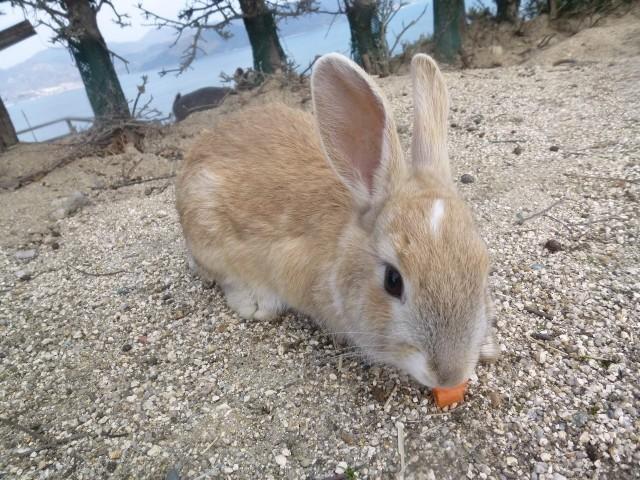 「ウサギ食文化復活の狼煙」にやっぱり出た 「やめろぉぉぉぉ」「カワイイのに」の声