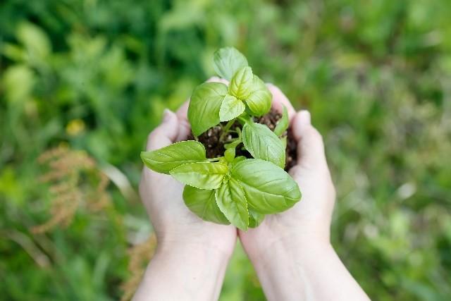 花を育てる高齢者はいきいき 認知症予防に「園芸療法」が注目