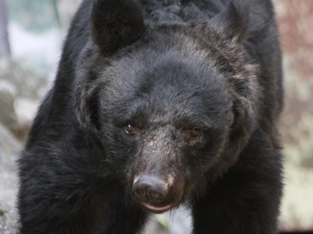 熊を素手で撃退した63歳空手家 「大山倍達を超えた」