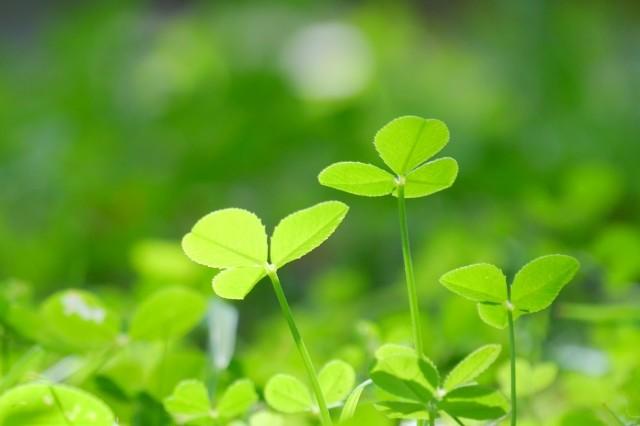 植物の細菌との戦いがスゴすぎる 葉の中で映画「七人の侍」の攻防