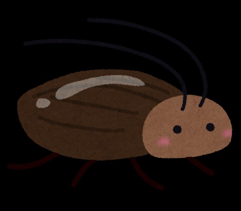 ゴキブリ繁殖にオス不要だった メスだけで生殖し3年も集団維持