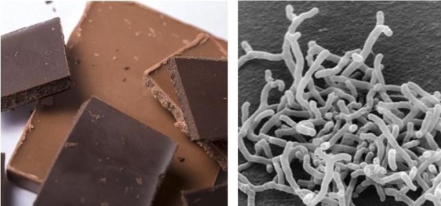 ビフィズス菌、高カカオチョコが増殖促進 森永製菓が研究発表