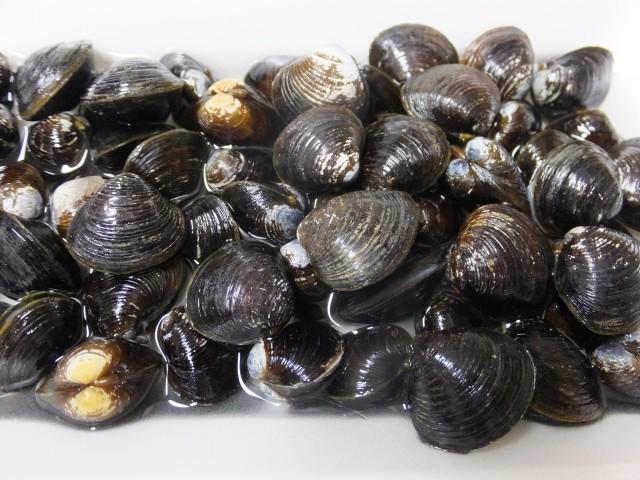 大阪・淀川のシジミから「貝毒」 しびれや呼吸困難「食べるな危険」