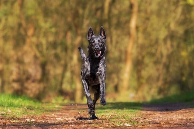 ペットとは節度ある付き合いを... 犬から感染する病気もたくさんある