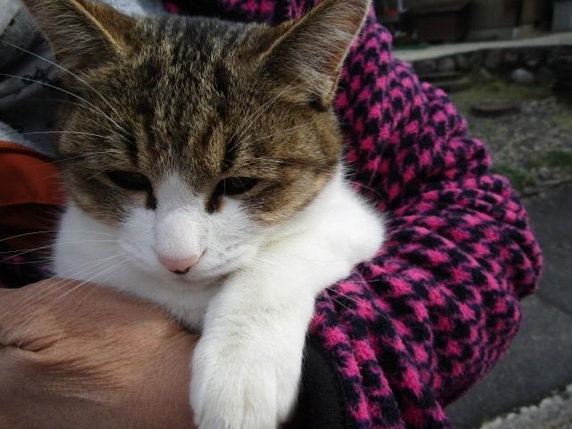 「猫アレルギー」でも猫を飼い続けたい 涙なしでは読めない努力と工夫の数々
