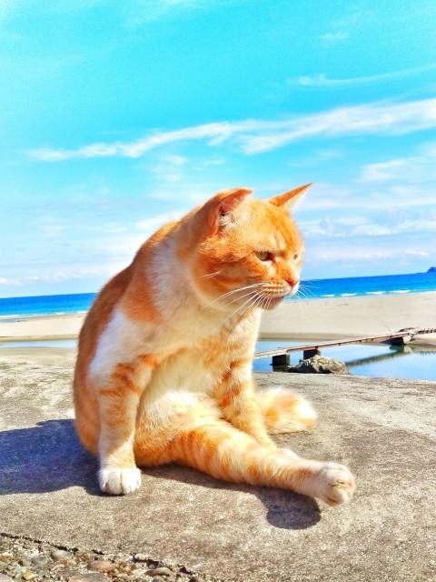 猫と人間だけがアルツハイマーになる わがニャンの認知症と向き合う方法