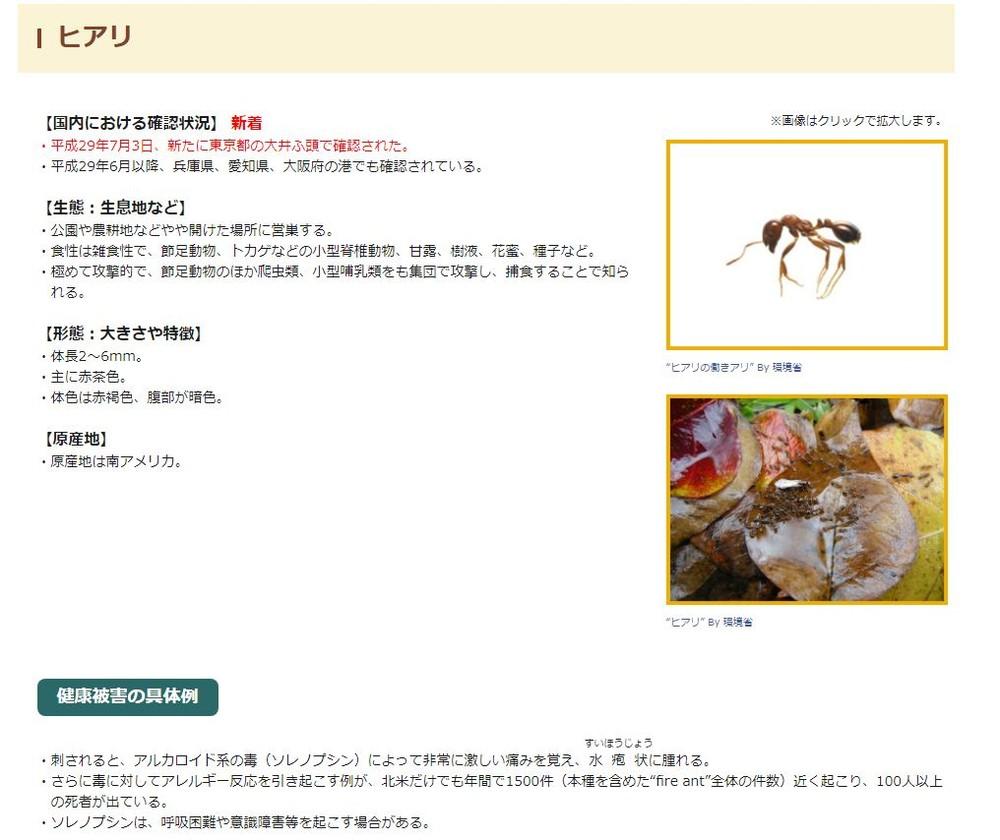 危険な外来生物ヒアリ ついに東京都内でも確認される