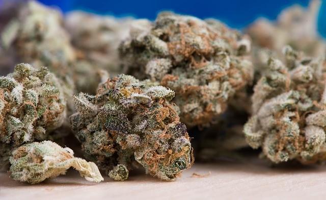 大麻合法化が急速に進む米国 依存性を警告する研究成果も次々発表