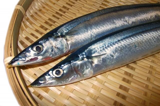 青魚を食べるとてんかん発作の予防に 魚油「DHA」の健康効果がスゴすぎ!