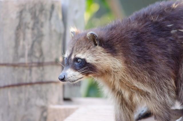「飼い猫にマダニ」で感染症が怖い 都市部に持ち込んで来る「犯人」とは