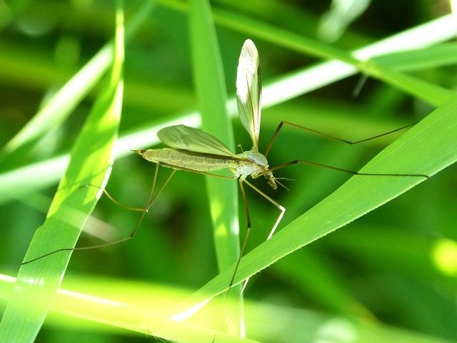 イタリア北部でマラリア患者が発生 熱帯の病気のはずがなぜ?