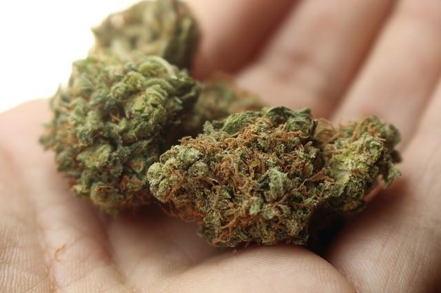 大麻で痛みやPTSDを緩和することはできない? 米退役軍人省、退役兵らに注意喚起