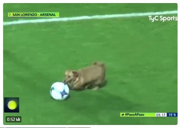 サッカー公式戦に小型犬が乱入! 華麗なドリブル披露→試合後になぜか「インタビュー」