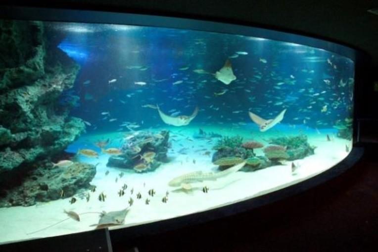 サンシャイン水族館、魚大量死で「神対応」 「これはもう1度行くしかない」の声も