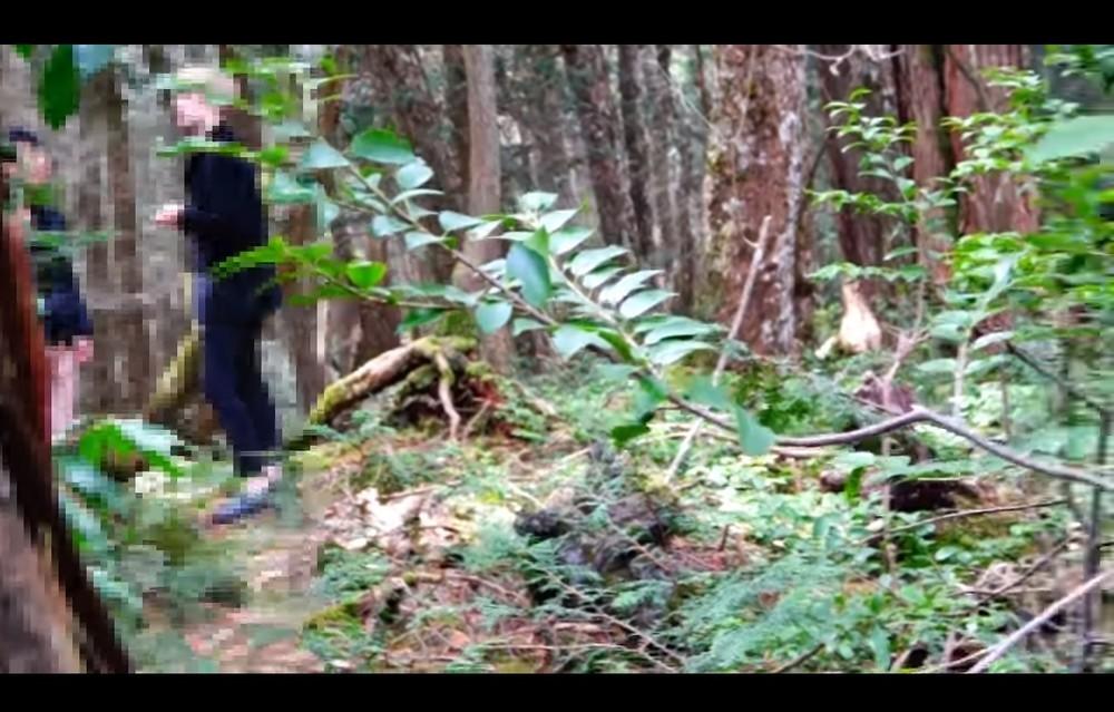 青木ヶ原樹海でYouTuberが「フリーハグ」 自殺志願者「説得」動画に賛否