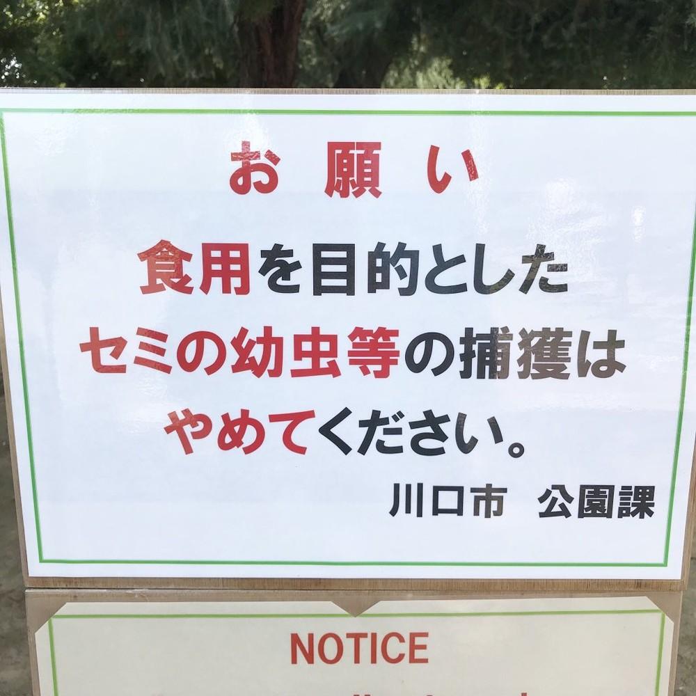 「食用目的のセミの幼虫捕獲やめて」 埼玉の公園担当課が注意促したワケ