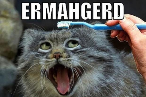 LOLcatsの一例