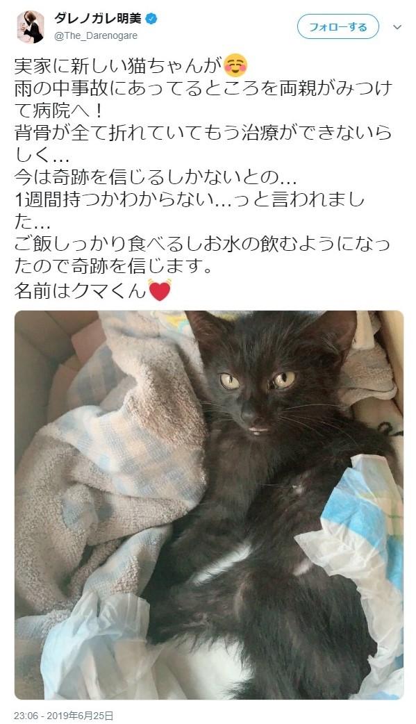 ダレノガレ、両親が大ケガの子猫を保護 「もう治療ができないらしく...今は奇跡を信じるしか」