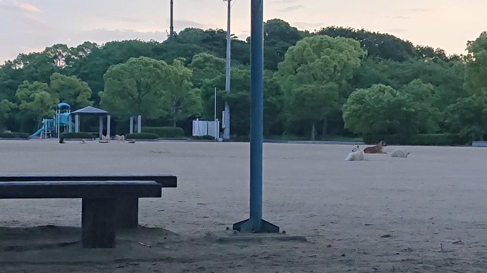 山口県周南市で「野犬」目撃多数 エサやりが原因と言うが...県 ...