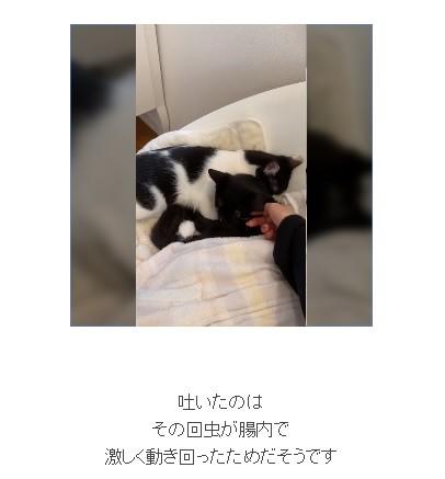 藤あや子、保護猫から寄生虫が 母子感染?「大切な家族に苦しい思い」と後悔