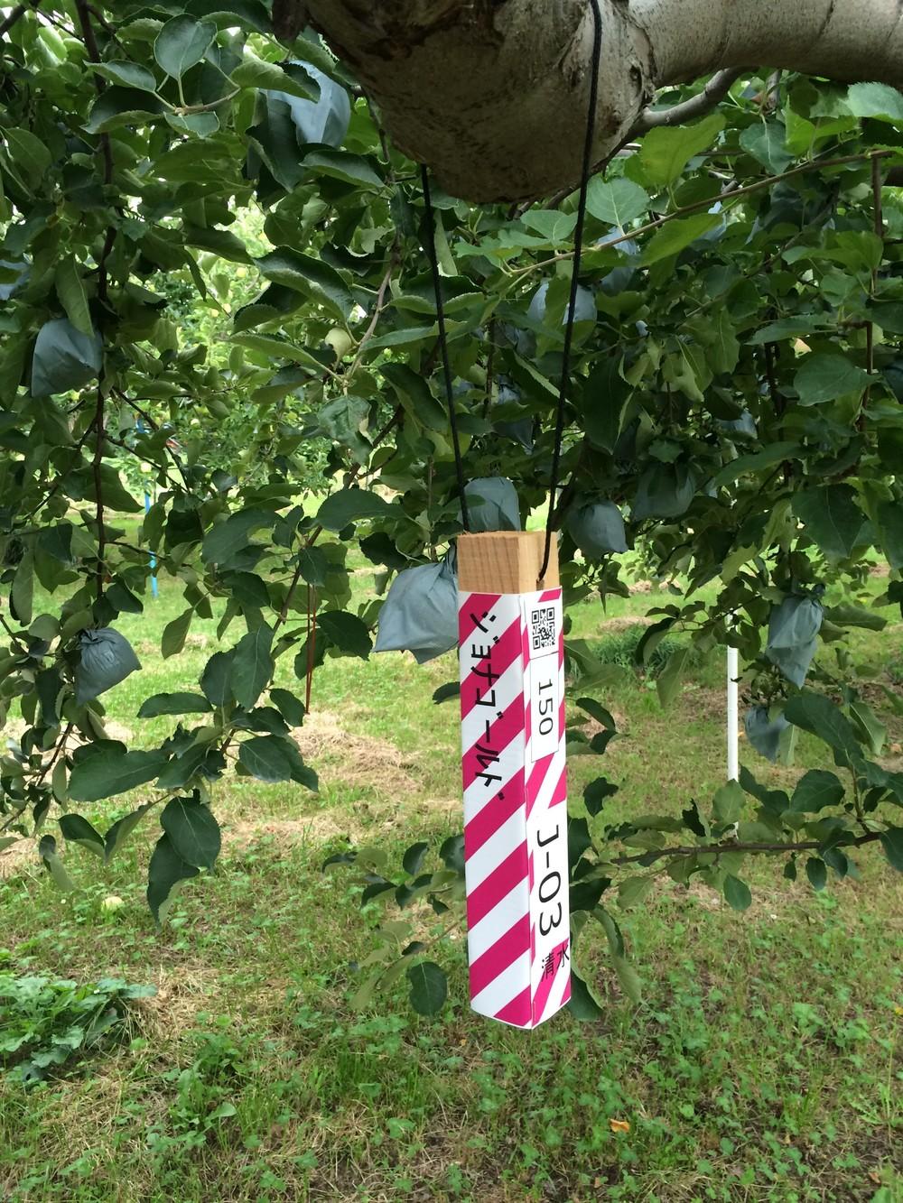 「スマート農業」で若手を振り向かせたい! CG農園で収穫テスト、QRで樹木管理...技術開発進む