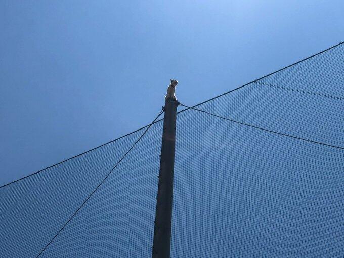 猫が鉄柱から降りられなくなった! 近畿大学が連ツイしたハラハラの救出劇