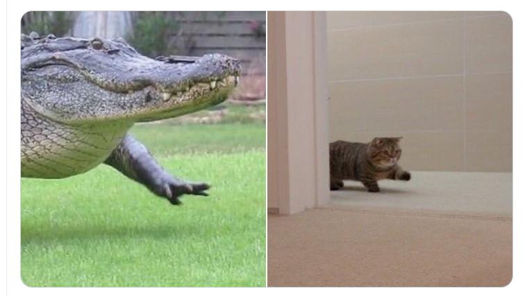 この組み合わせが日本のツイッターで流行した。右側の子猫がクリームヒーローズの「ルル」。
