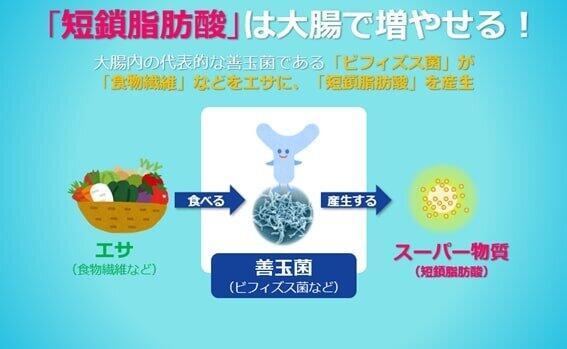 短鎖脂肪酸を増やすには善玉菌とそのエサが必要