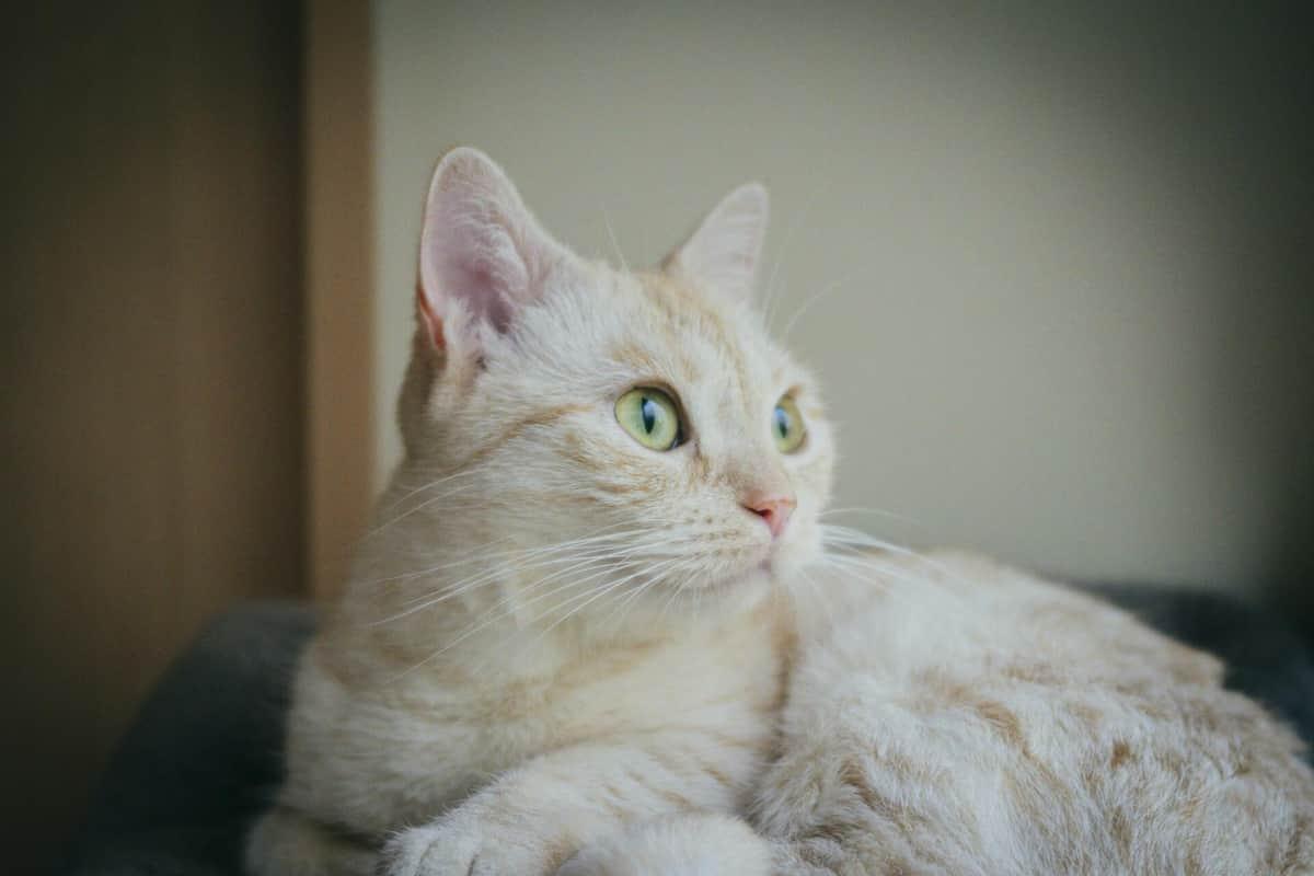 猫の話題はなぜバズる? 「翻訳アプリ」の流行から考える、拡散を呼ぶ「3つの要因」とは
