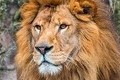 新入社員研修は「ライオンキングを観る」 社長が込めた想いとは