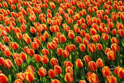 オランダを再現したテーマパークと映画がシナジー生む?