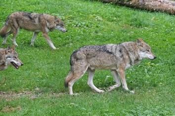 2017年は「狼年」になる グローバル競争で勝ち抜くには