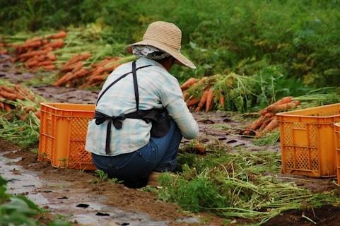農業法人経営の組織数が10年で倍増(画像はイメージ)