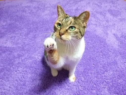 ネコの手も借りたい!