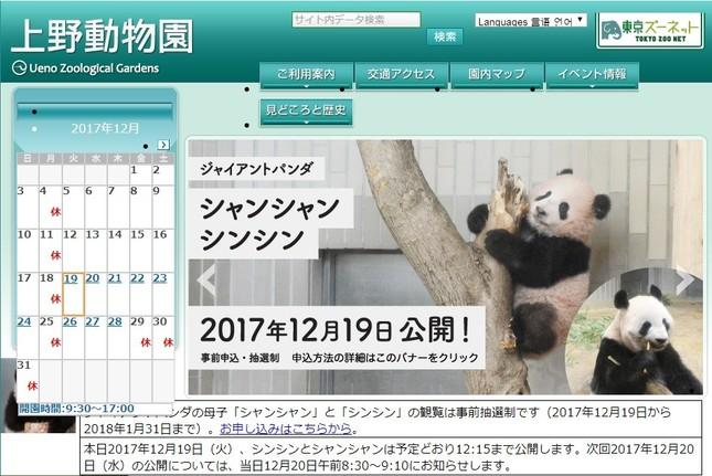 シャンシャンの一般公開始まる(画像は上野動物園公式サイトより)