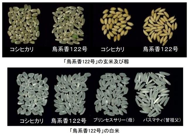 「鳥系香122号」の品種名が「プリンセスかおり」に決定(画像は、鳥取県農業試験場の発表資料より)