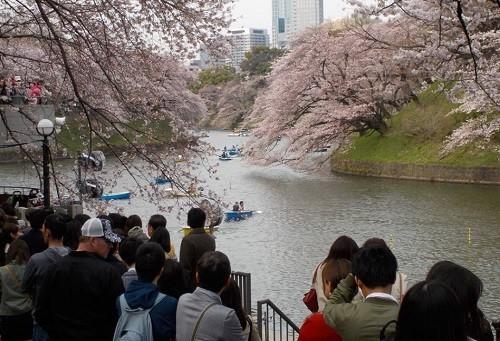 近年は「花見」もインバウンド向け観光資源になっている