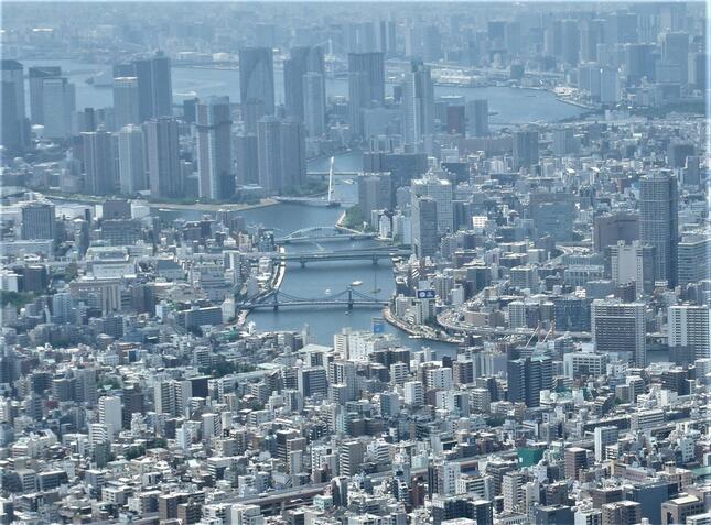東京の街にも育て!「ディスラプター」