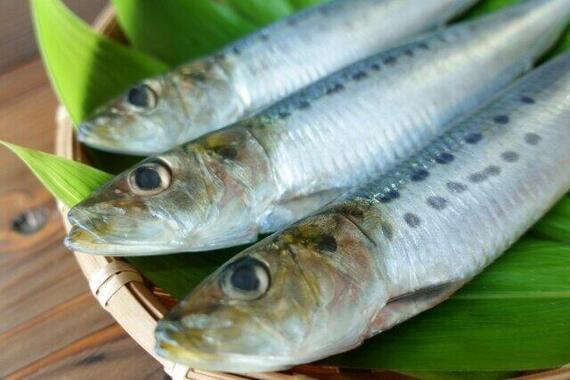 注目の「オメガ3オイル」は青魚から摂取できる