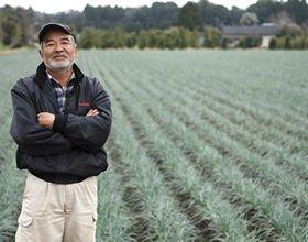 宮崎にいけば、青空のもとにこんな畑が広がっている