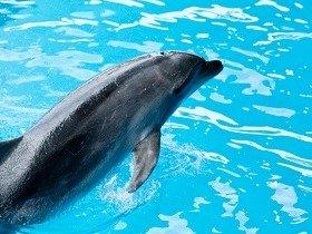イルカのように泳いでストレス解消