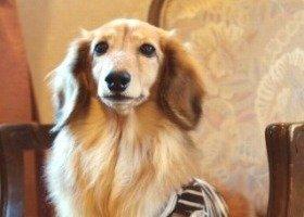 犬にはまったく罪はないのだが