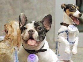スマホは自然と子犬に向けられ、SNSで写真が拡散する(首輪についているのがWi-fiルーター)