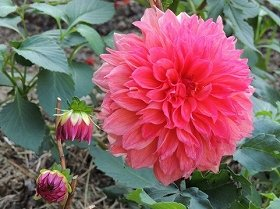 「魔法の一言」で心に花が…