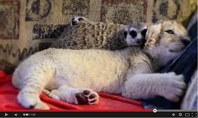 かわいい動物「異色」の共演 思わず頬が緩む「最強」動画