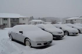 降ったね、雪