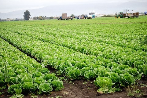 農業への挑戦