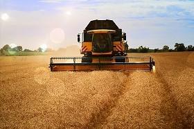 一括して「収穫」する時代も曲がり角