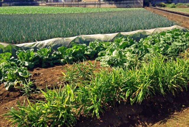 2022年、都会の「生産緑地」が宅地に変わる! どうなる地価? どうなる農家?(鷲尾香一)