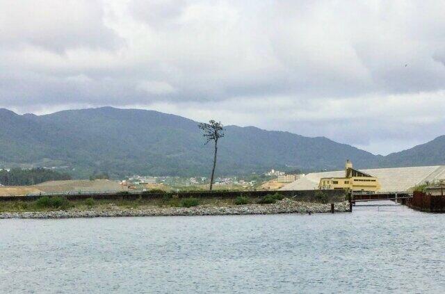 東日本大震災から10年(写真は、「奇跡の一本松」)